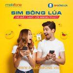 Hòa mạng Sim bông lúa Mobifone nhận nhiều ưu đãi hấp dẫn